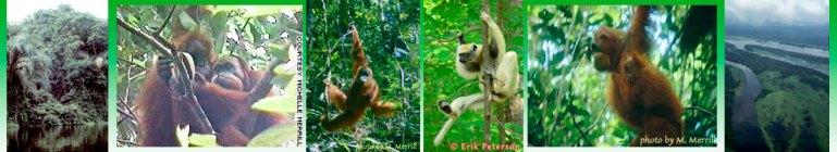coralinebanner-primates.jpg