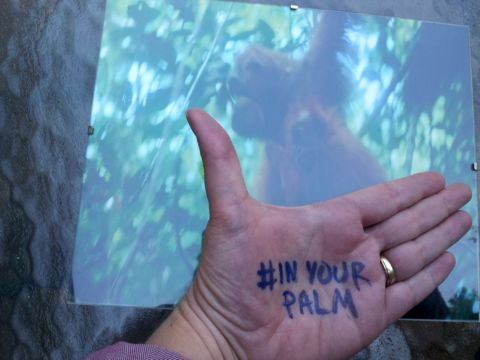 #inyourpalm The Power is In Your Palm - to protect wild orangutans from deforestation for palm oil production. Photos by me (M. Merrill).